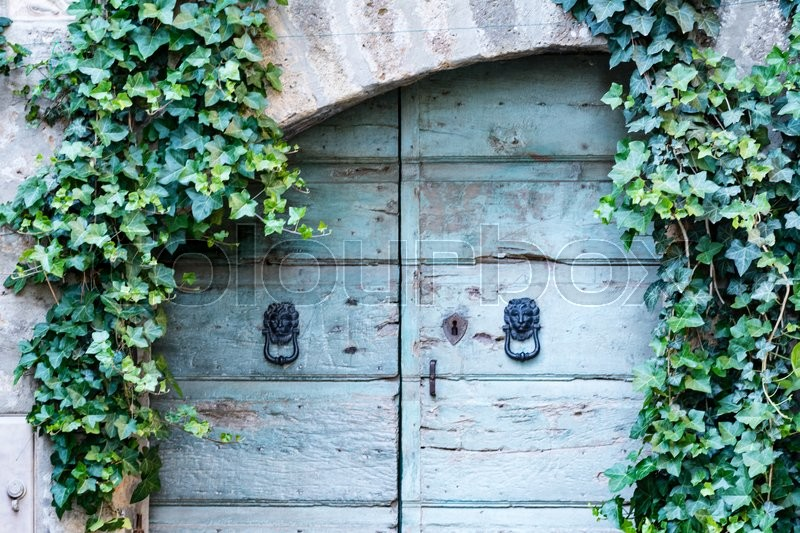 Stock image of 'Old wooden door with clappers and ivy around'