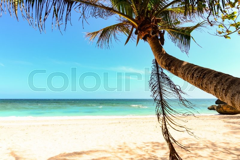 Stock image of 'Palm tree leaf, swing on a becah in Boracay, Philippines'