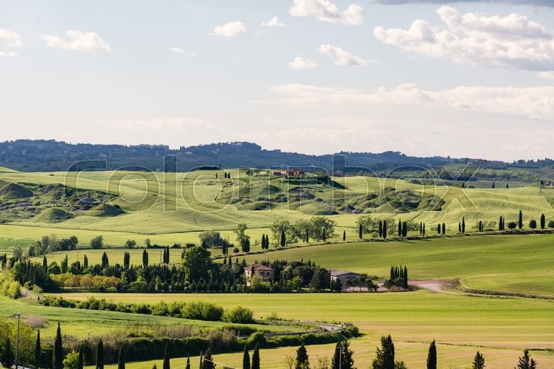 Stock image of 'A road near Siena in Tuscany lined with cypresses'