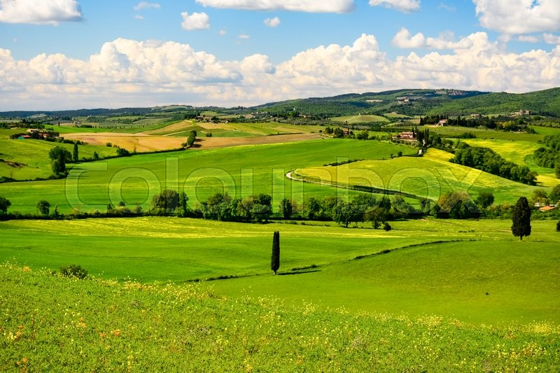 Stock image of 'Typical tuscan landscape in spring with hills and a cypress'
