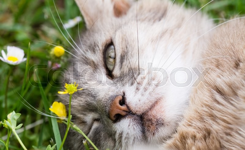 Stock image of 'A cat blink an eye  lying on the grass'