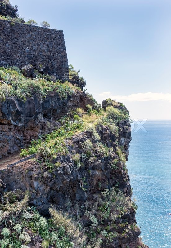 Stock image of 'rocks with flowers and cactus on madeira island'