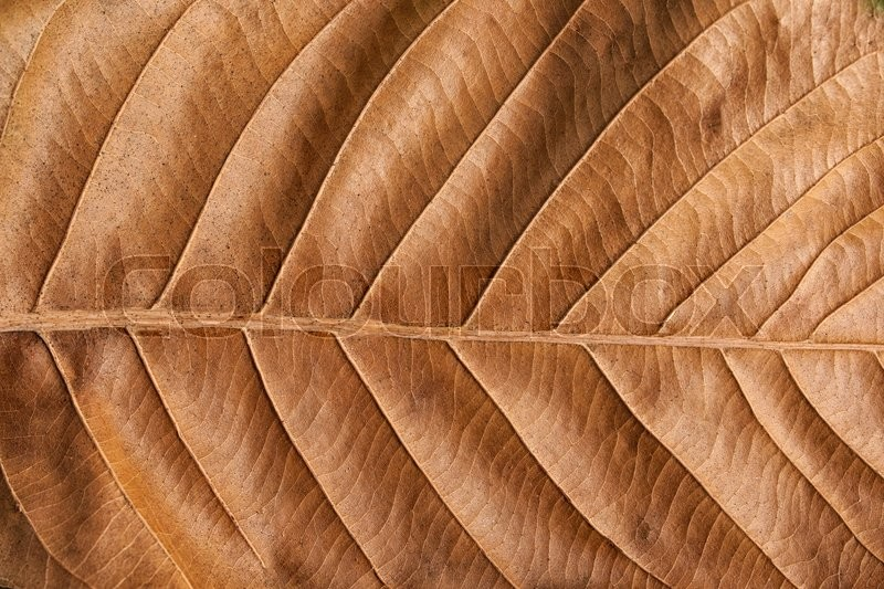 Stock image of 'Old brown leaf texture background .'