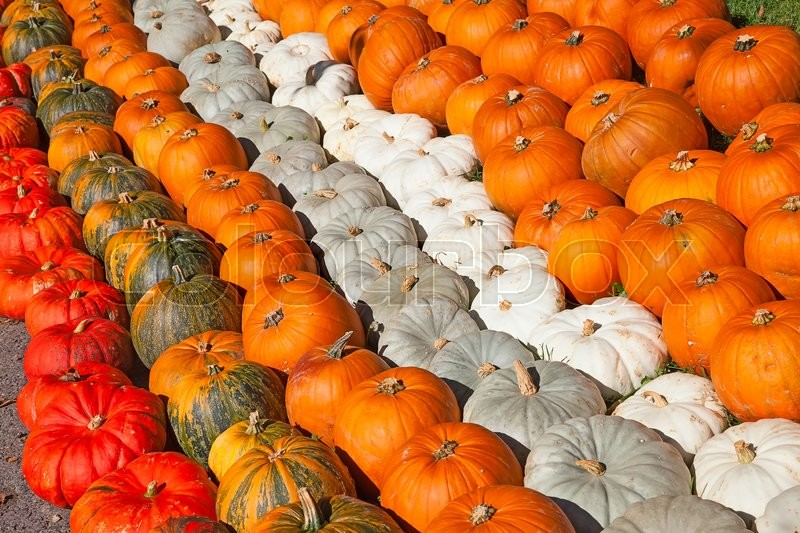 Stock image of 'Colorful pumpkins collection on the autumn market'