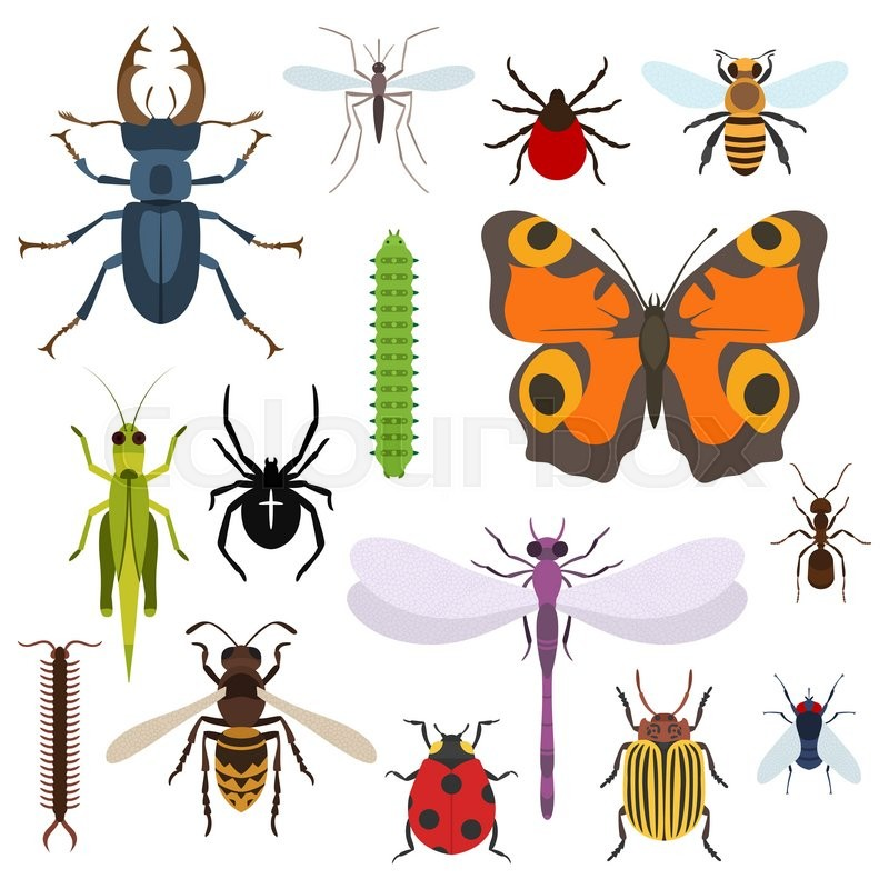 Insects and bugs, pests and midge set of icons from top view ...