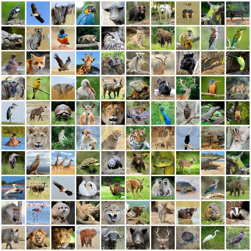 Collage Of 100 Photos Wildlife Animals And Birds
