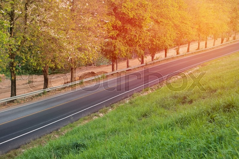 Long road with tree and grass field around, stock photo