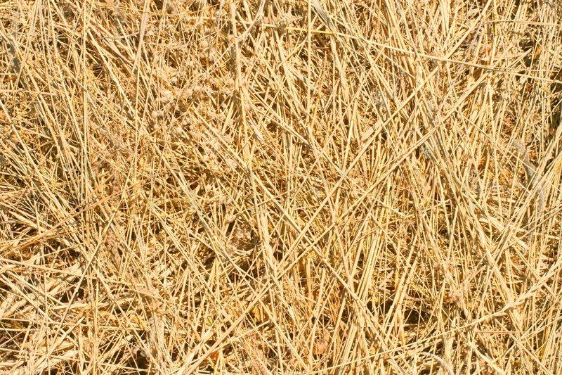 Background Dry Yellow Hay Grass Stock Photo Colourbox