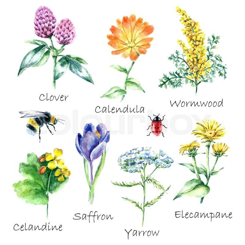 Natural Flower Food
