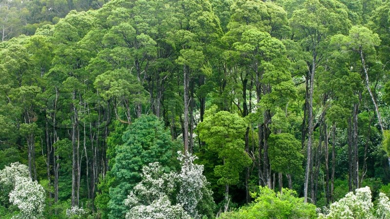Australian rain forest seen from above into the canopy | Stock Photo | Colourbox & Australian rain forest seen from above into the canopy | Stock ...