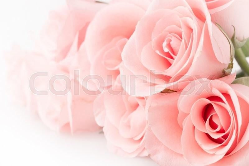Rose flower bouquet vintage background, stock photo