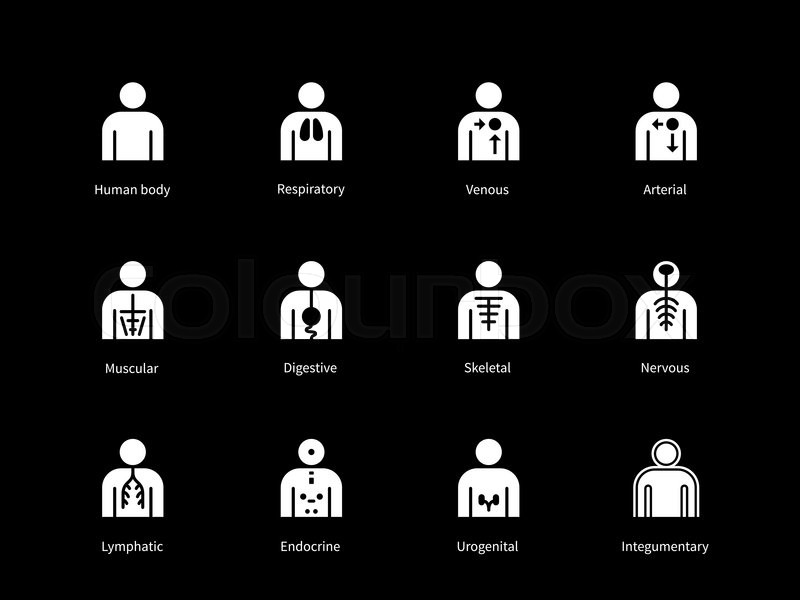 Systems Of Human Body Digestive Stock Vector Colourbox