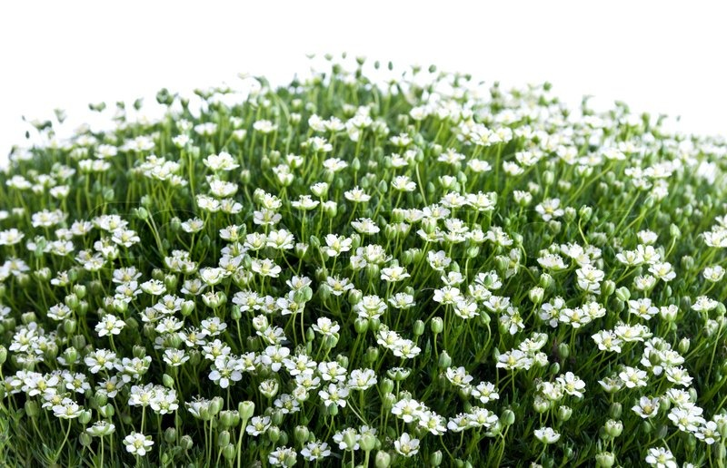Green grass and flowers isolated on a white background stock photo green grass and flowers isolated on a white background stock photo mightylinksfo Choice Image
