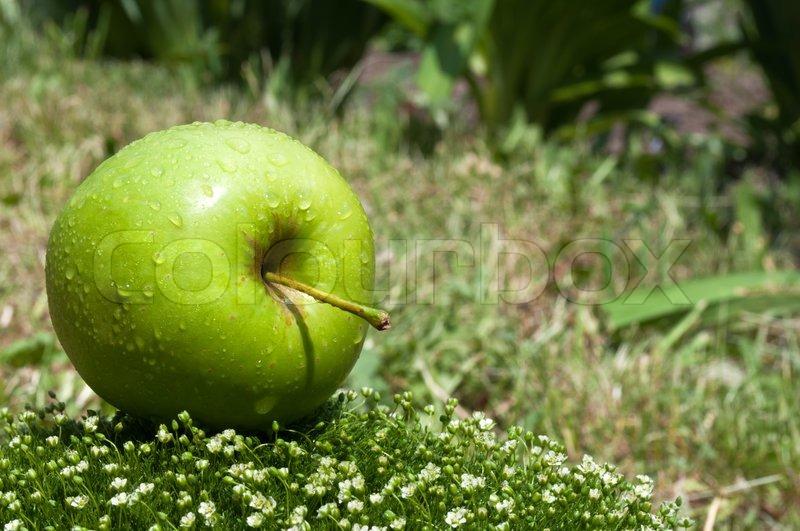 apple fruit background grass - photo #40