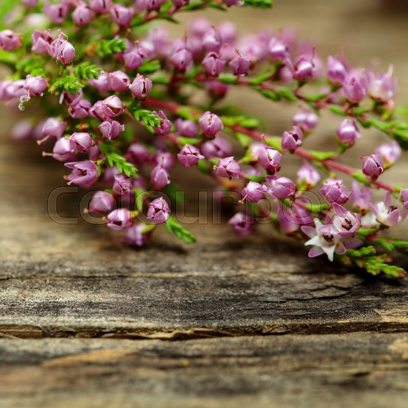 Rustic flower, macro - blurred floral blossom background, stock photo