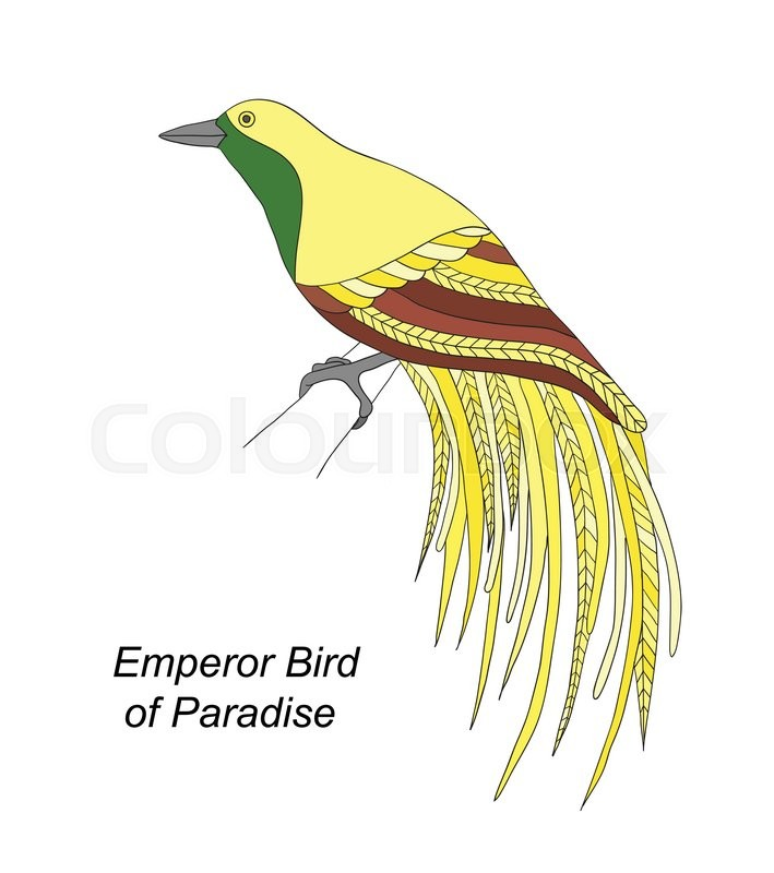 Tropical bird Emperor Bird of Paradise hand draw on a white background, vector