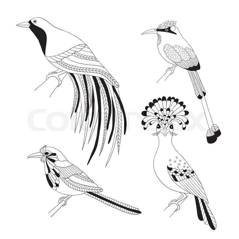 Set of tropical birds hand draw. Emperor Bird of Paradise, royal flycatcher, Lilac-breasted Roller and Turquoise-browed motmot on a white background, vector