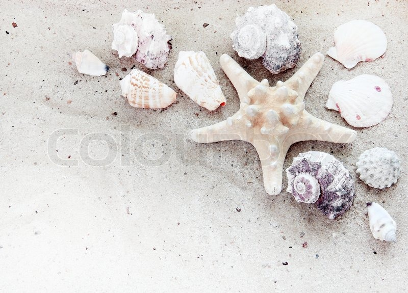 Beach White Sand With Starfish Printed And Sea Shells Like A ...