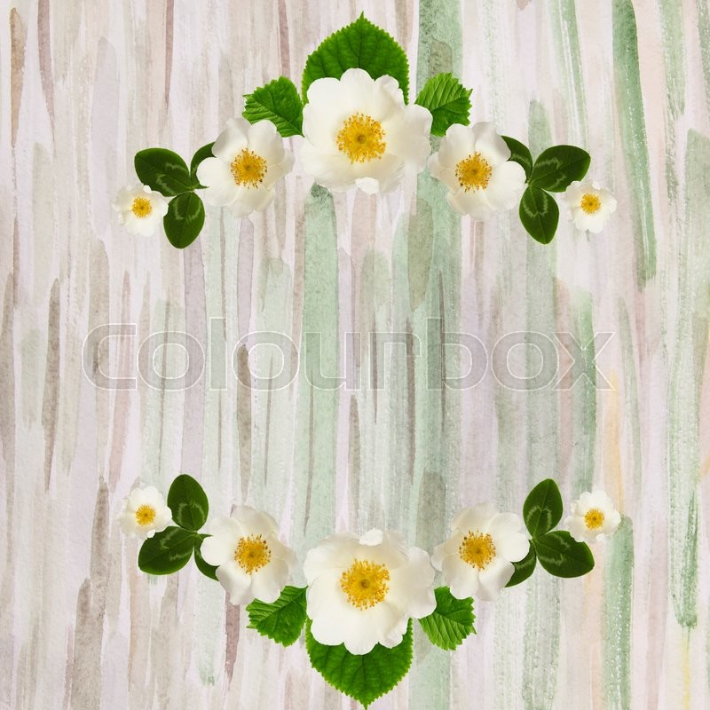 Frame with white flowers and leaves of wild rose on watercolor background. Flat lay. Frame wreath, stock photo