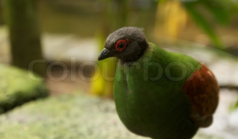 Stock image of \'tropic, exotic, wild animal\'