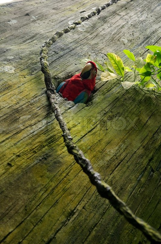 Stock image of \'trekking, parrots, tame animal\'