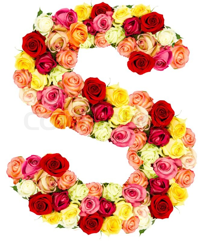 S, Roses Flower Alphabet, Stock Photo