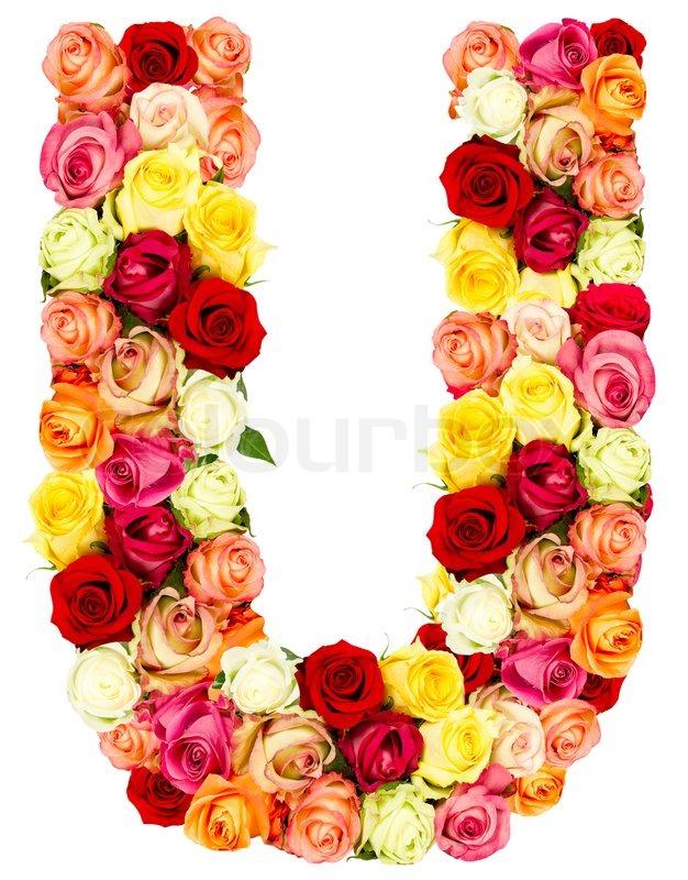 U, roses flower alphabet isolated on white | Stock Photo ...