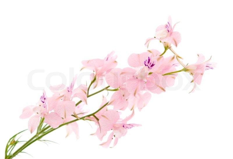 Summer flowers on a white background stock photo colourbox mightylinksfo