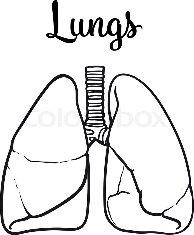 sketch the lungs  vector sketch hand
