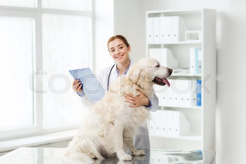 Medicine, pet, animals, health care and people concept - happy veterinarian or doctor with golden retriever dog and clipboard at vet clinic, stock photo