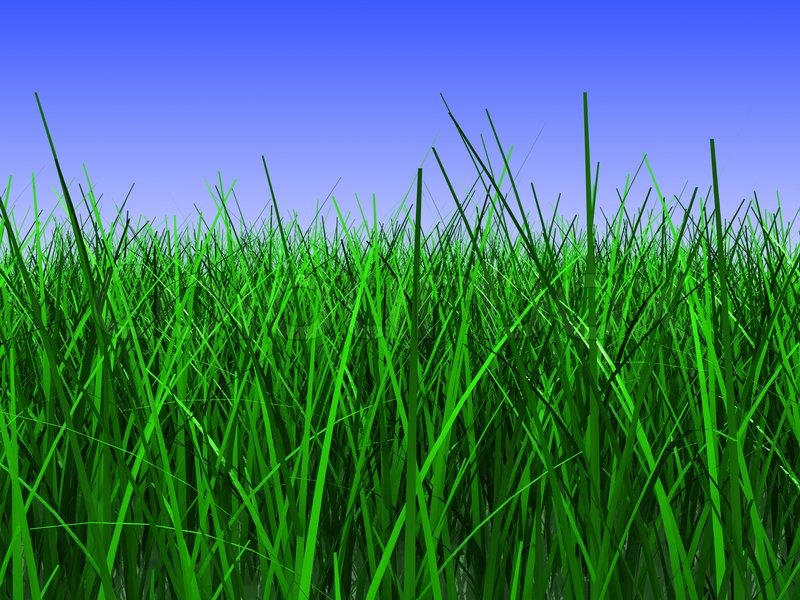 3d illustration of green grass closeup, over blue sky ...