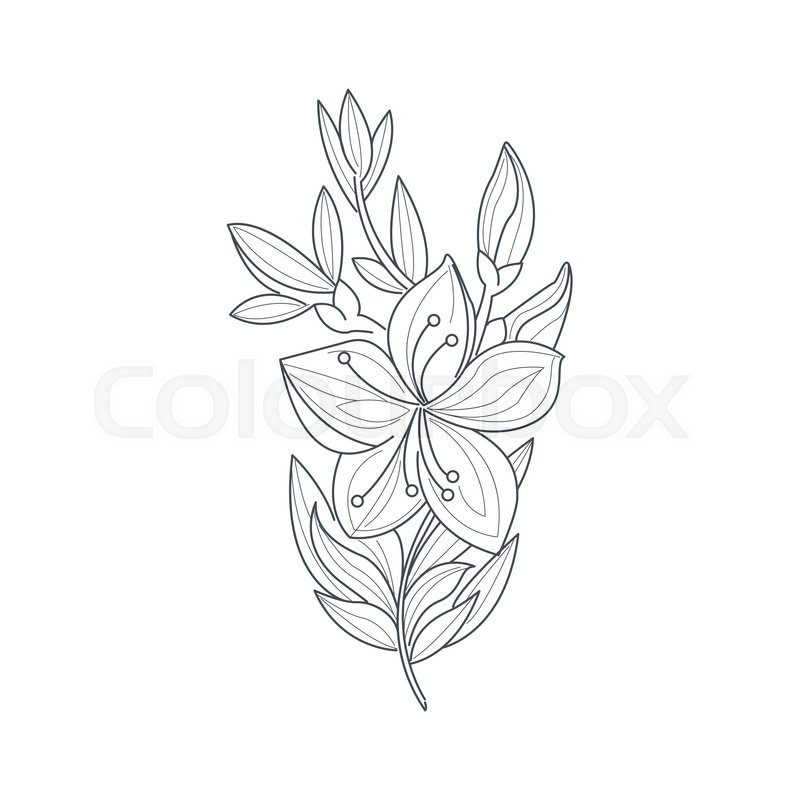 Line Drawing Jasmine Flower : Jasmine flower monochrome drawing for coloring book hand