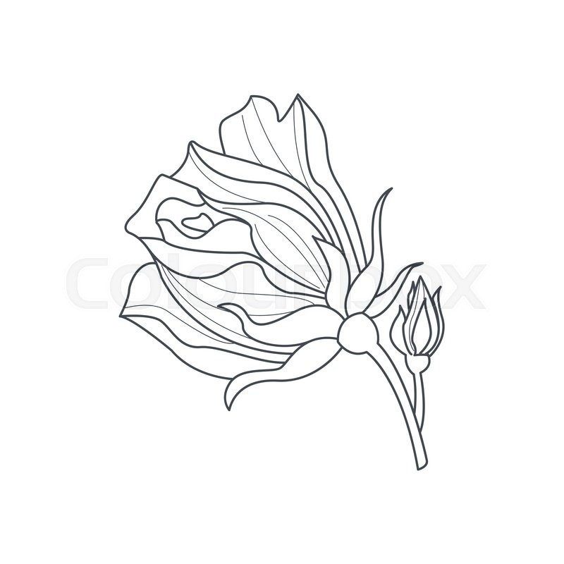 Rose Bud Monochome Drawing For Coloring Book Hand Drawn Vector ...