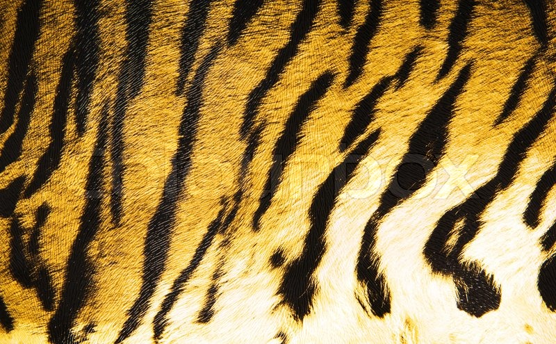 imitation of tiger leather as a background stock photo colourbox