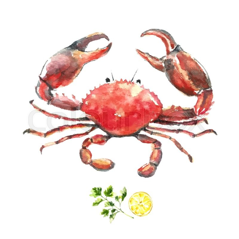 Watercolor crab.Hand draw isolated illustration on white background ...