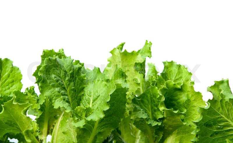 Lettuce Leaves On A White Background Stock Image Colourbox