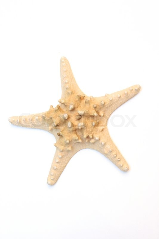 Starfish Isolated On A White Background Stock Photo