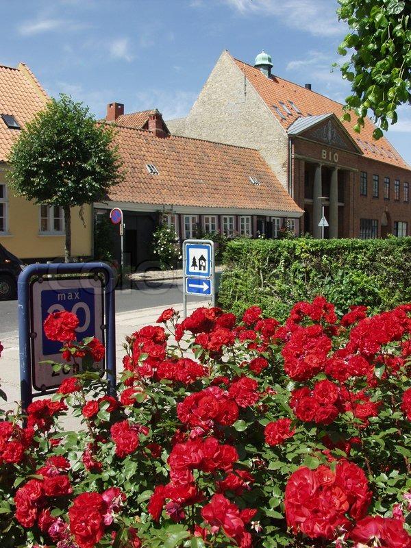 Assens assens kommune bed blomst blomster blomsterbed blå himmel ...