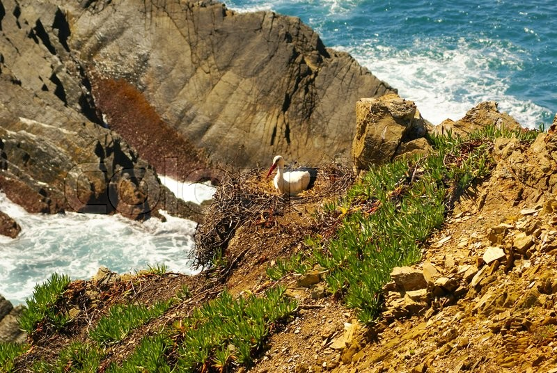 Stork nest at the edge of the cliff, Cabo Sardao, Alentejo, Portugal, stock photo