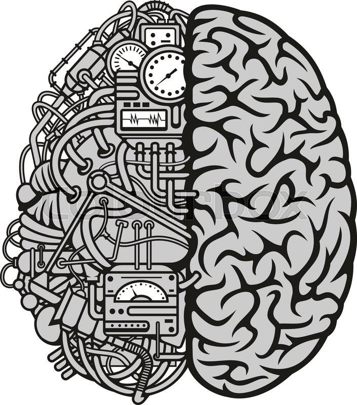 Brain vector front