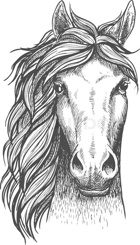 Beautiful arabian stallion sketch icon for horse breeding symbol beautiful arabian stallion sketch icon for horse breeding symbol equestrian or riding club emblem design front view of a head of a purebred horse with sciox Choice Image