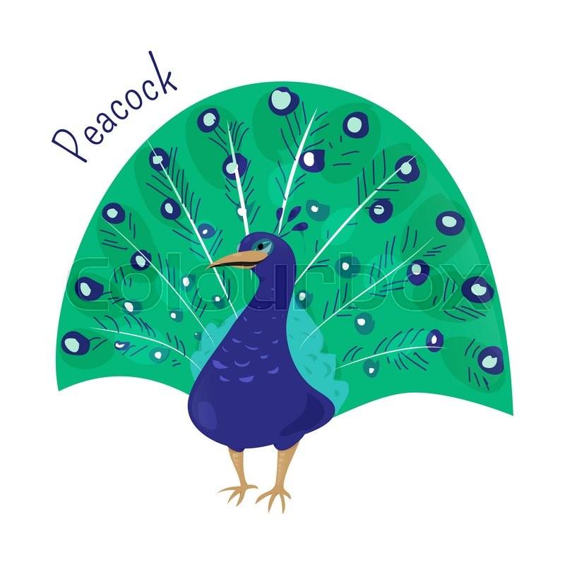cartoon peacock isolated on white blue or indian peafowl myanmar rh colourbox com cartoon peacock drawing cartoon peacock