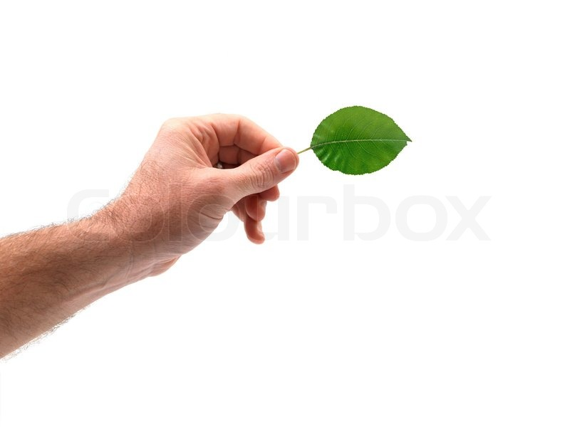 A Hand Holding A Leaf Isolated Against A White Background