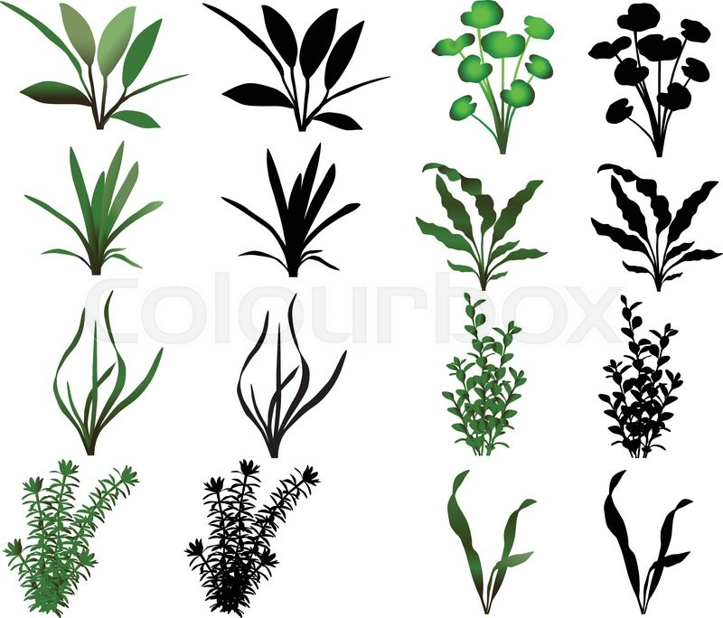 Collection of different species of water plants stock for Waterside plants