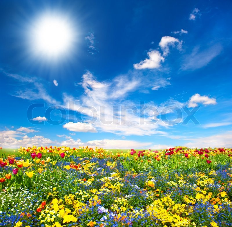 Flowerbed. colorful flowers over blue sky, stock photo