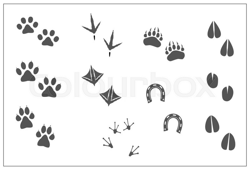 Animals footprints- cat paw, dog paw, bear paw, birds- chicken feet ...