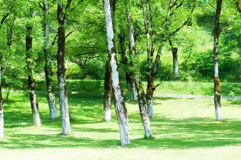 Natur konzept grünen wald während der hellen sommertag