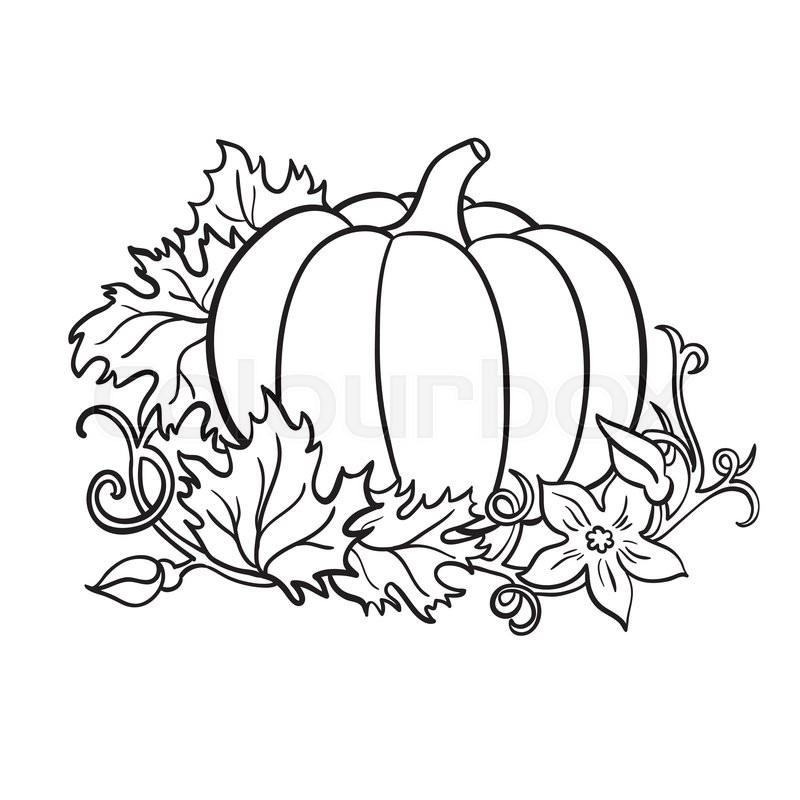 Pumpkin Vector Drawing Isolated Outline Vegetable With Leaves And