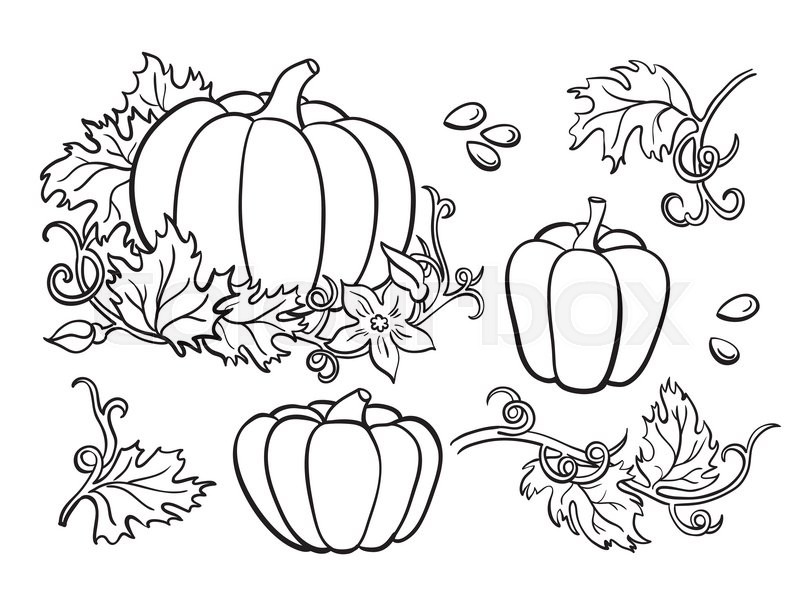 Pumpkin vector drawing set isolated outline vegetable for Pumpkin seed coloring page