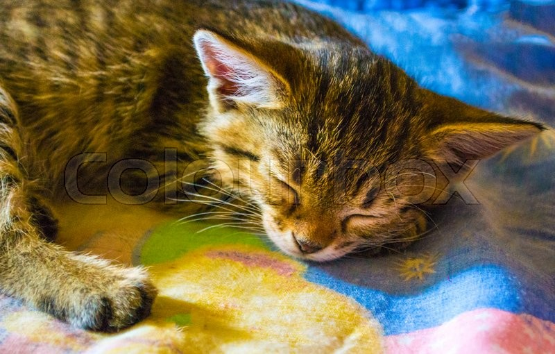 Sleep kitten. pet small kitten sleep. cat, stock photo
